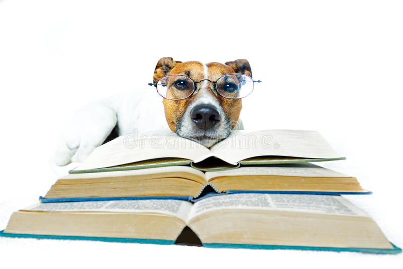 Dog reading books stock images