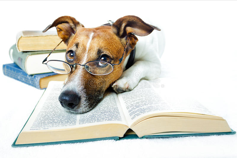 Dog reading books. A dog in the middle of books