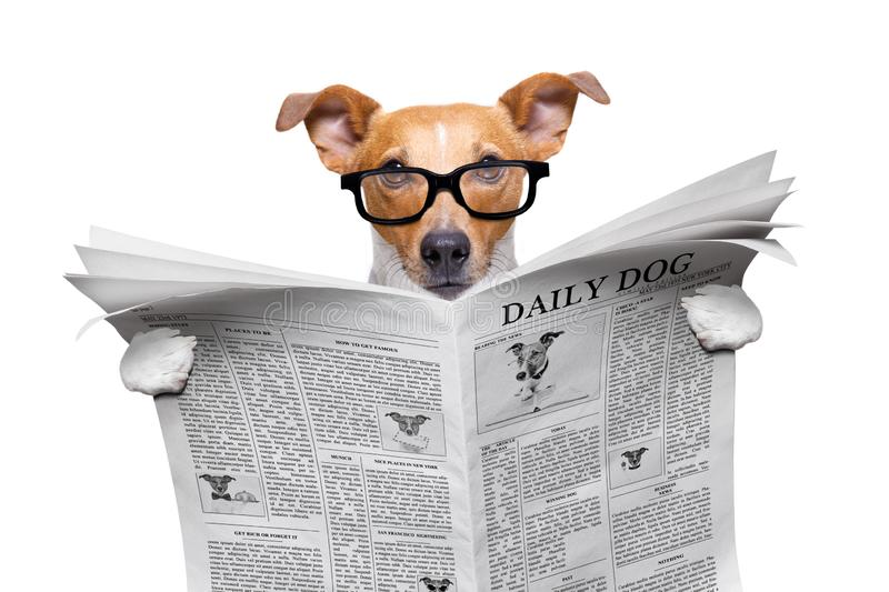 Dog reading newspaper royalty free stock images