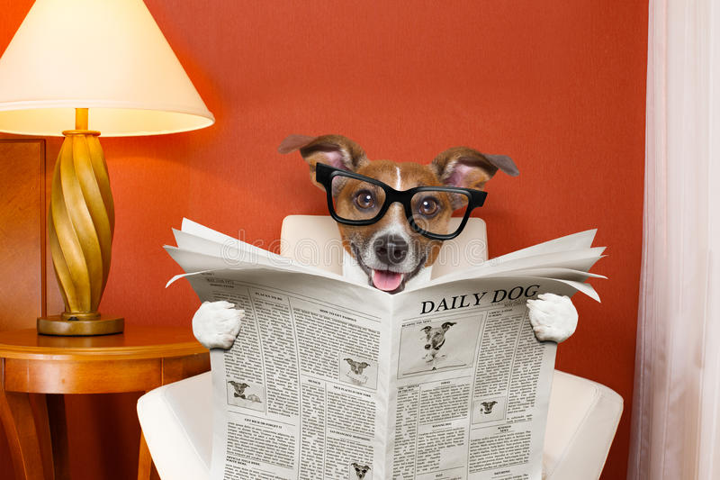 Dog reading newspaper at home royalty free stock image