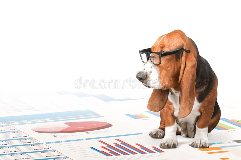 Dog reading royalty free stock photography