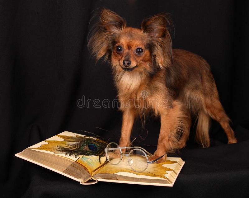 Download The Dog Reads The Book Royalty Free Stock Photos - Image: 19080678