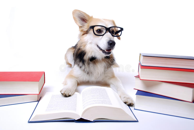 Download Dog reads book stock photo. Image of literature, mixed - 20311148