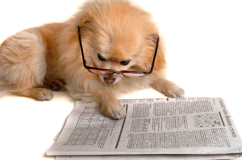 Dog Reads Newspaper royalty free stock photography