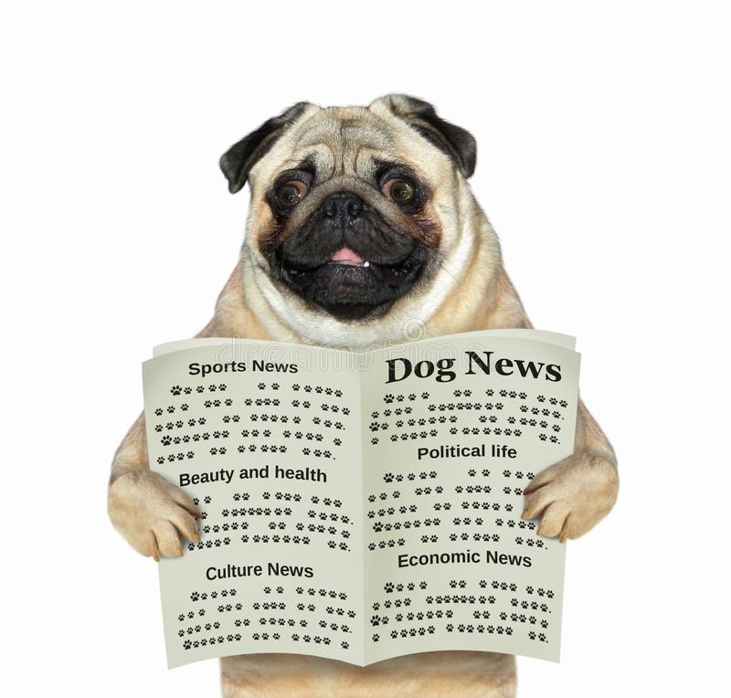 Dog reads a newspaper 2 royalty free stock image