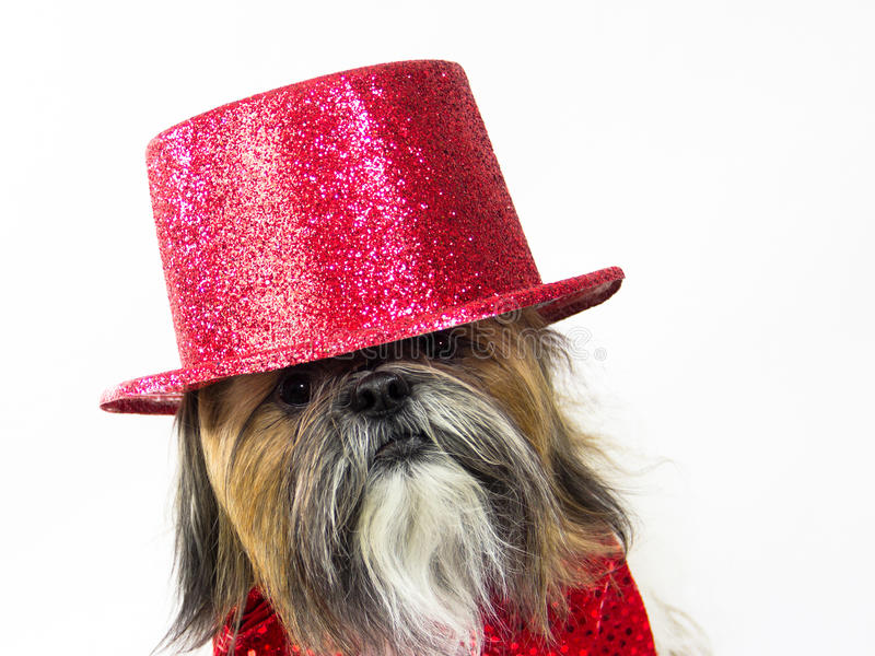 Download Dog In A Red Top Hat Royalty Free Stock Photo - Image: 27824035