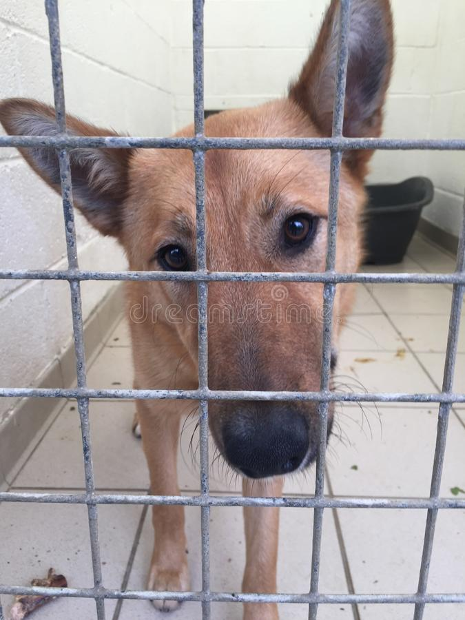 Dog at a rescue shelter close up. Portrait royalty free stock images