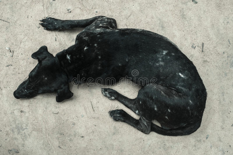 A dog. Resting on a bright surface royalty free stock photos