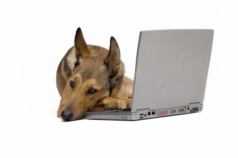Dog is resting on laptop