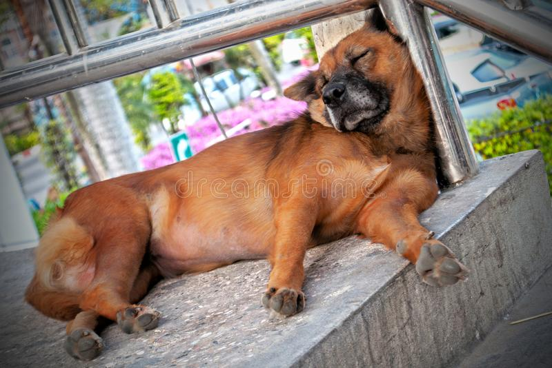 Dog resting on stairs royalty free stock image