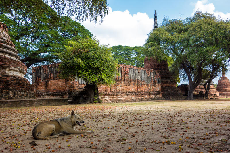 Dog rests at Thailand Temple Ruins stock photos