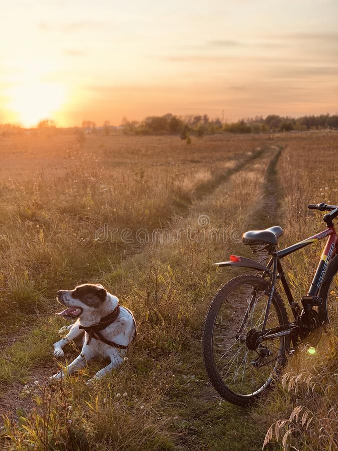 The dog rests after a walk with the owner on the bike. Pet and bike in the field on the road under the sunlight. Beautiful scenery royalty free stock images