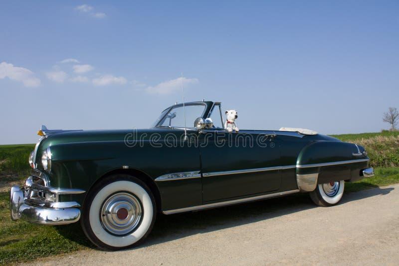 A dog in a retro car stock image