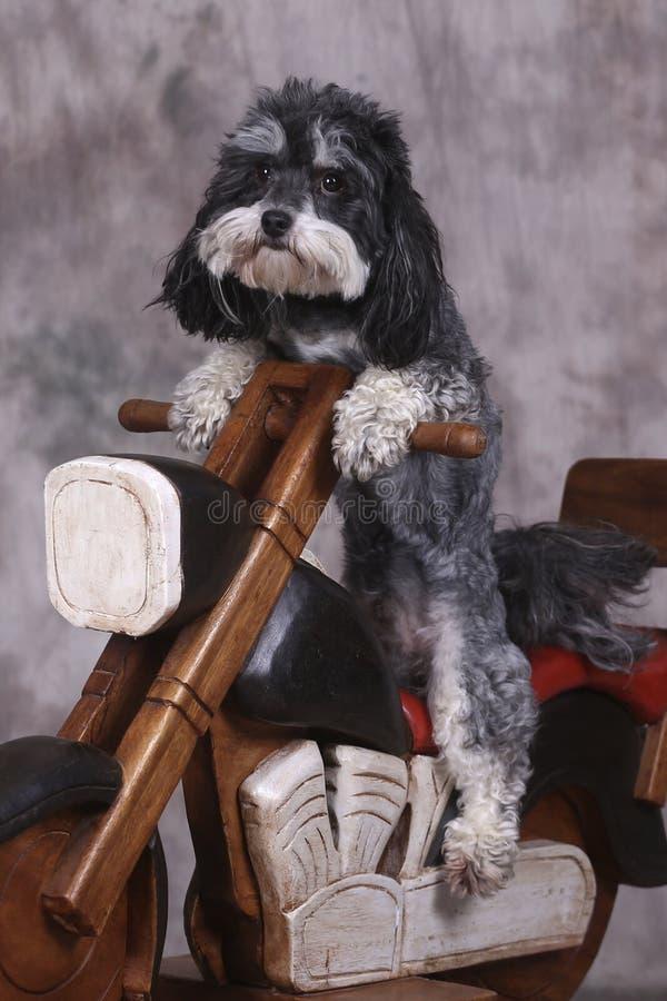 Dog and motorbike stock photos