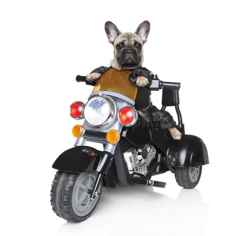 Free Dog Riding On A Motorcycle Stock Photo - 21573210