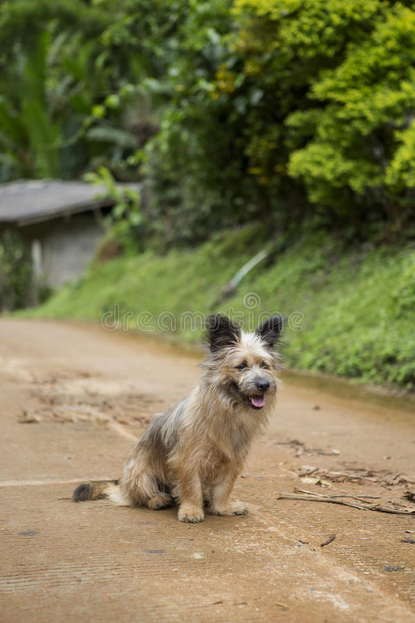 Dog on the road royalty free stock image