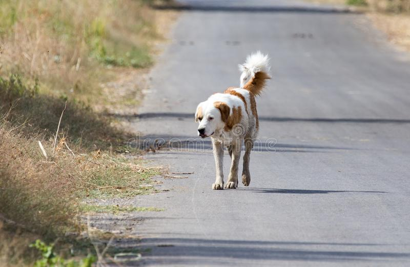 Dog on the road in nature royalty free stock image