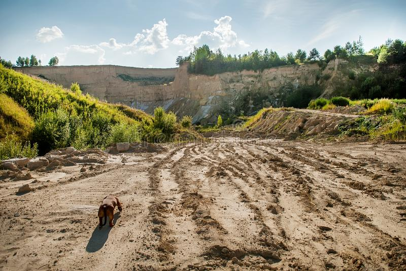 Landscape with a road. Dog on a road to the clay quarry royalty free stock photography