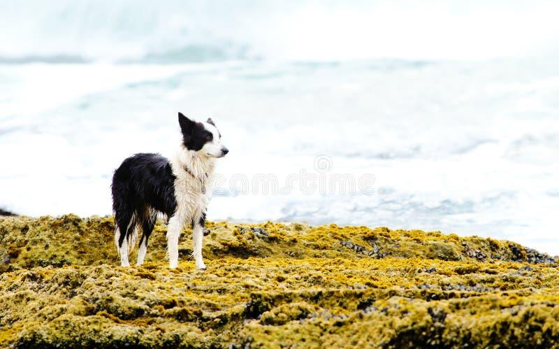 Dog on the rocks royalty free stock photos
