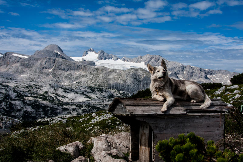 Download Dog on the roof stock photo. Image of environment, rock - 38929882