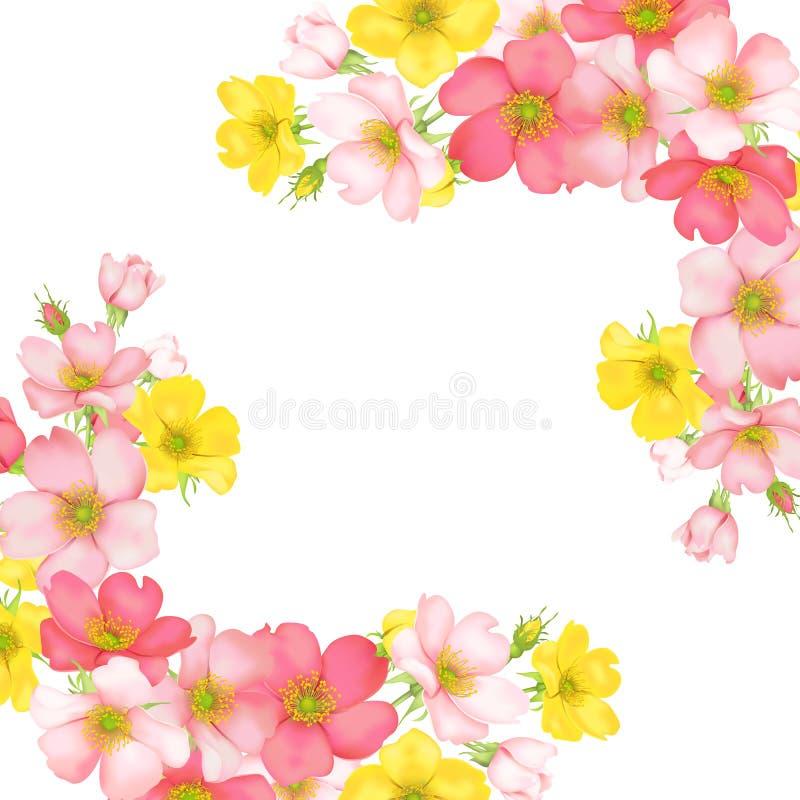 Dog-rose blooms. wild rose vector illustration vector illustration
