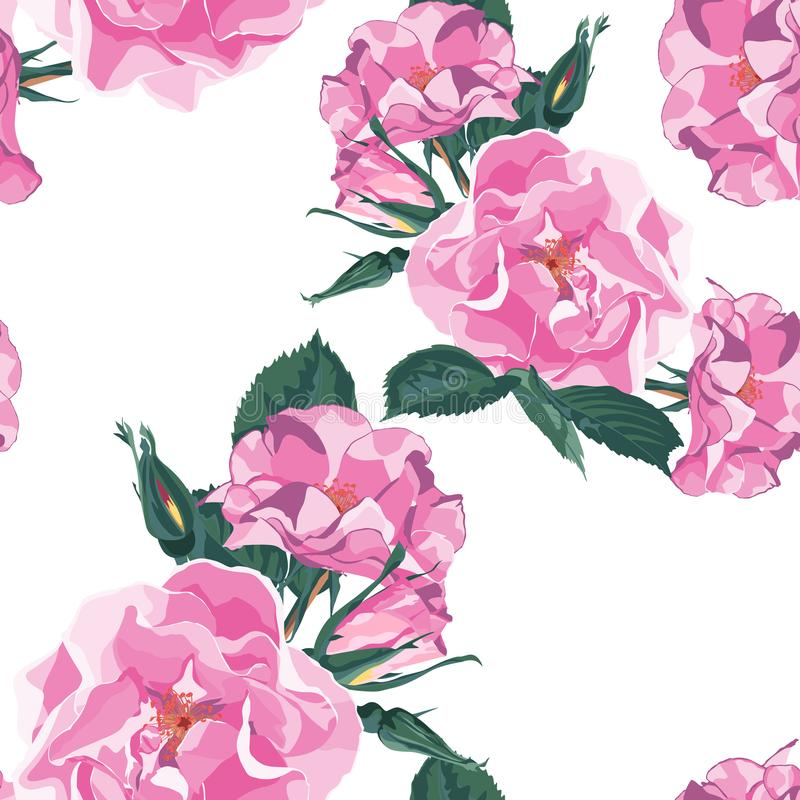 Dog-rose blooms. Wild violet rose vector seamless pattern. Template for textiles, paper, wallpaper. White background vector illustration