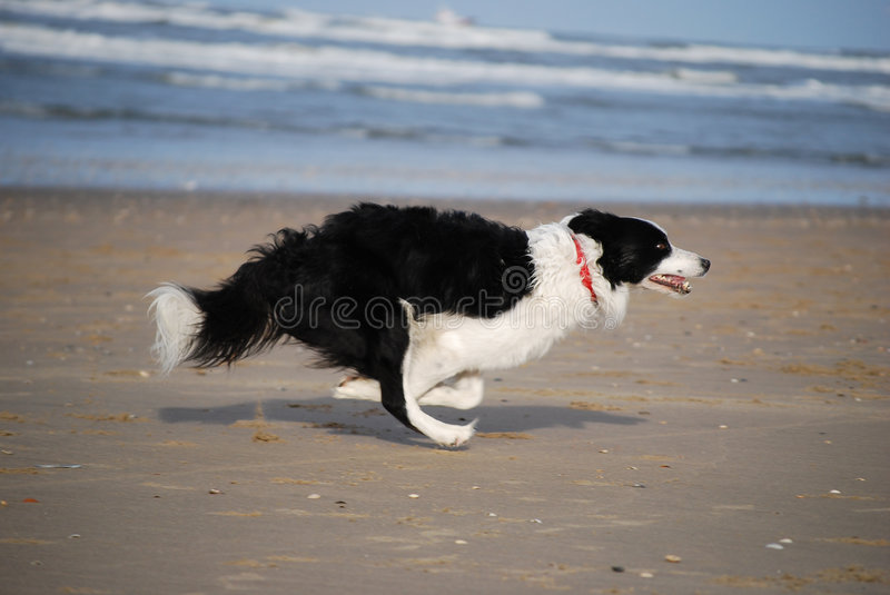 Dog running fast stock photo