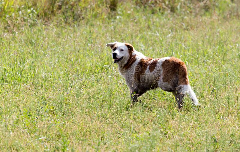 Dog running on grass outdoors royalty free stock photo