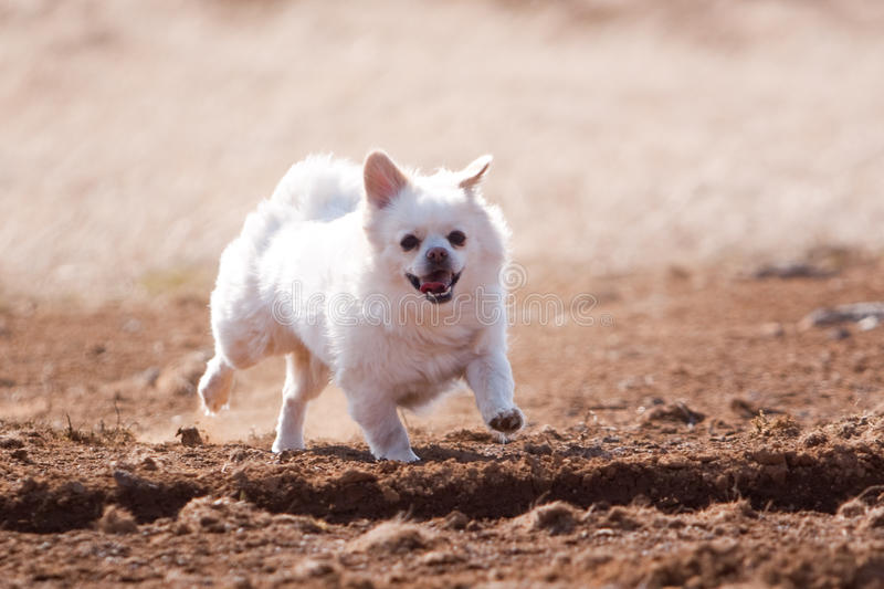 Download Dog running on sand stock photo. Image of carefree, exercise - 14000786