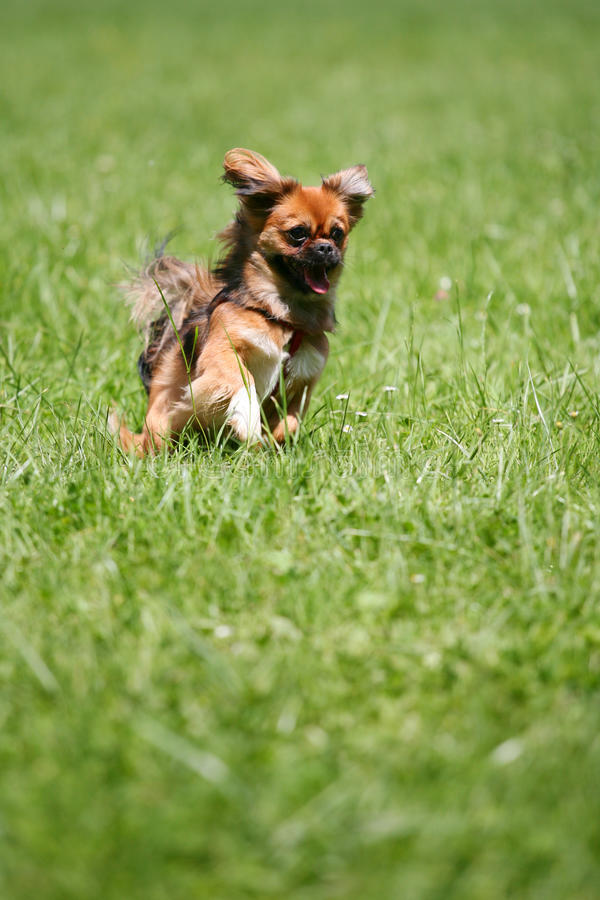 Dog running after stick royalty free stock photos