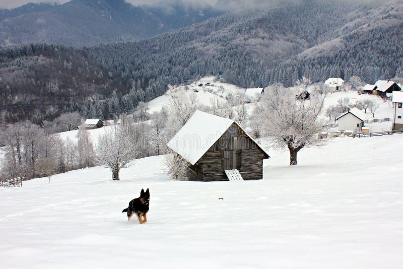 dog running By under vintertid arkivbilder