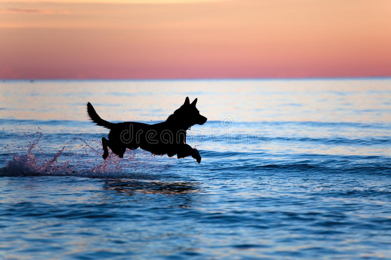 Dog running on water against sunset. Silhouette of a dog running on water against horizon royalty free stock photography