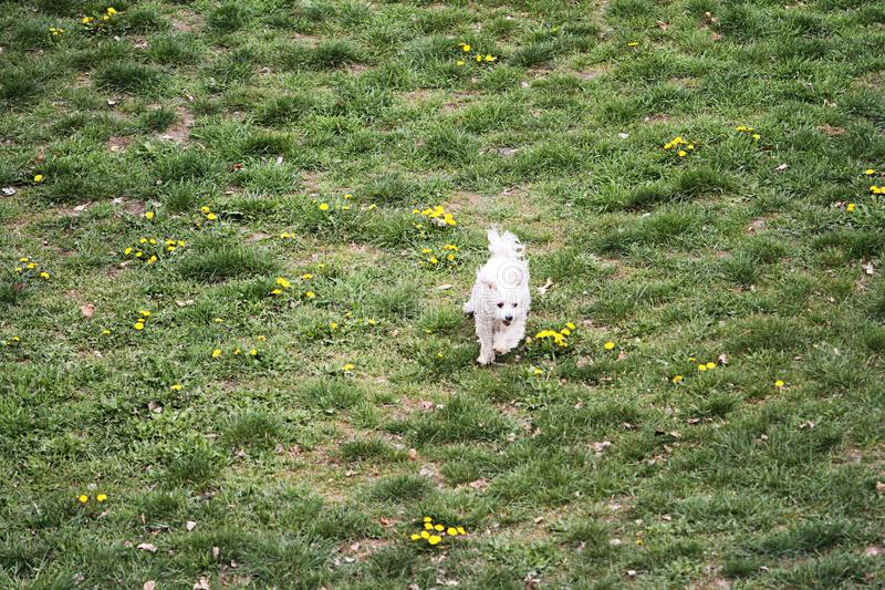 The dog runs on the grass. A happy dog runs on the grass in the nature of full flowers. nn stock images