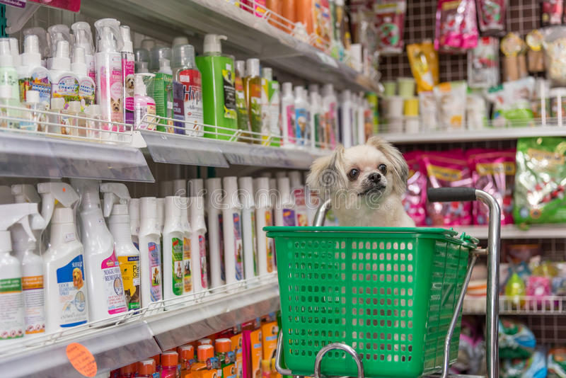 Dog, så gullig väntan som en älsklings- ägare på älsklings- shoppar royaltyfria bilder