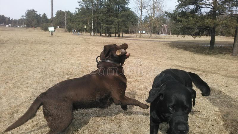 Dog& x27; s lizenzfreies stockfoto