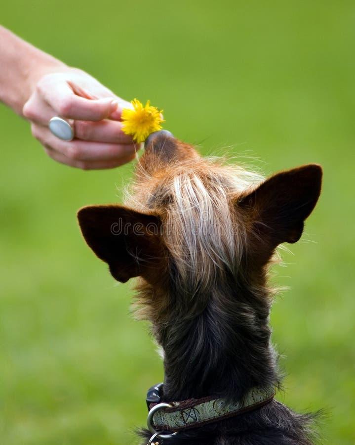 Dog's Love stock photography