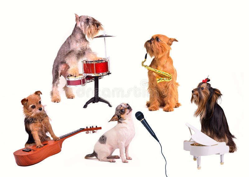 Dog's orchestra/ band stock image