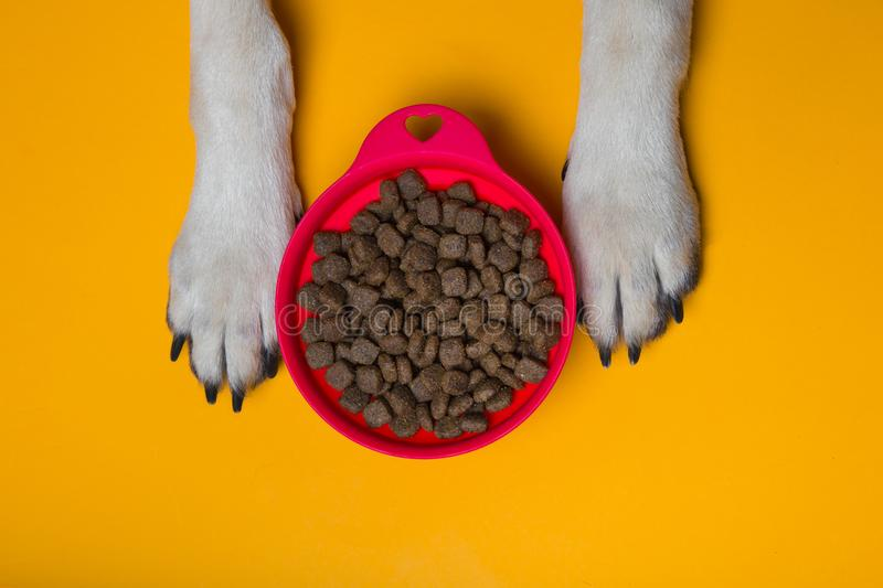 Dog`s paws on the floor with red silicone bowl of dry food. dog`. S paws on a yellow background. the concept of the love of a petr royalty free stock photo
