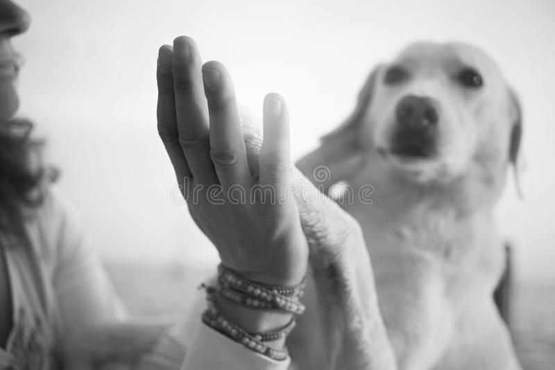 Dog`s paws and man`s hands gesture of friendship. Concept of love royalty free stock image