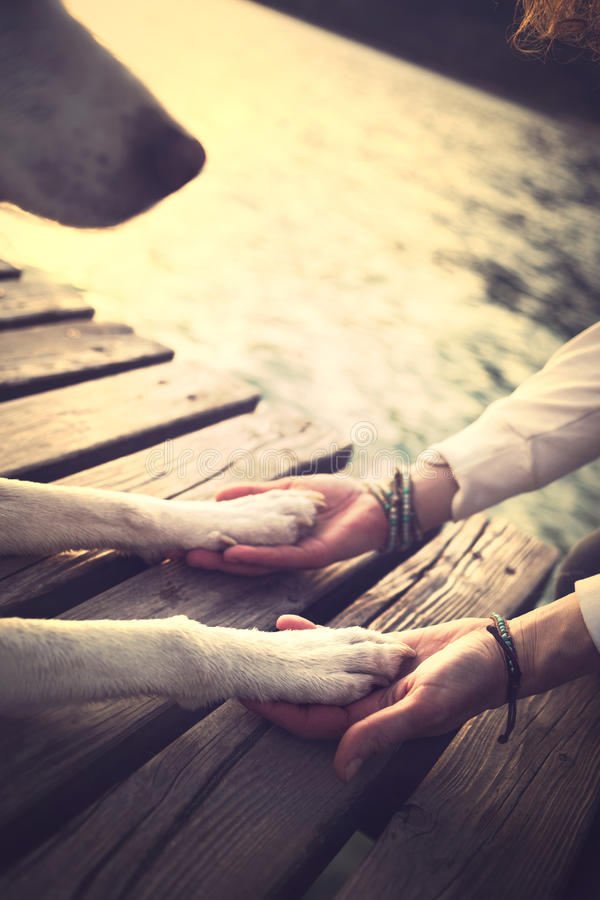 Dog's paws and man's hands gesture of friendship. In the nature stock photo