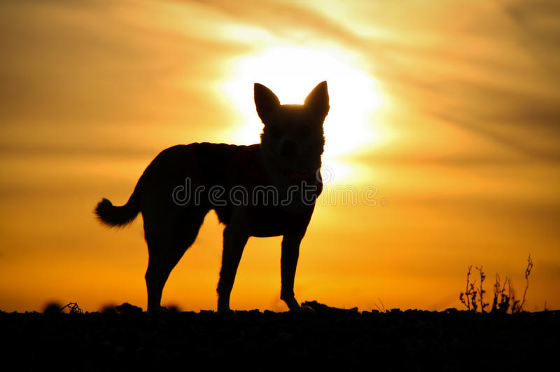 Dog`s Silhouette royalty free stock images