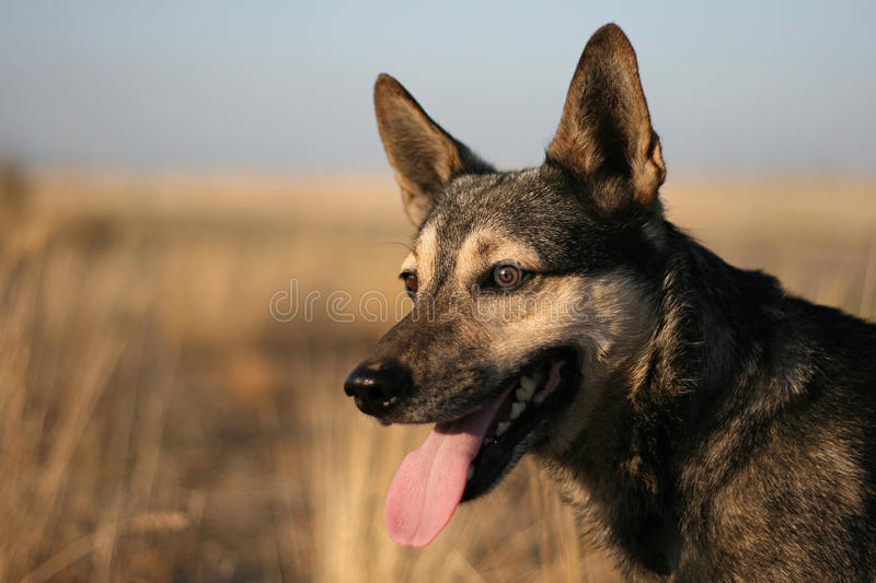 Dog's view stock photography