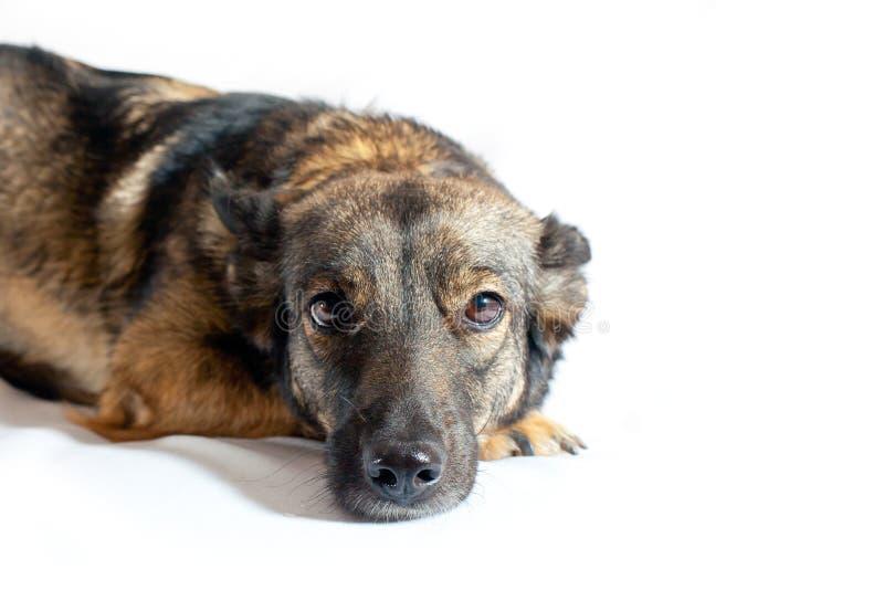 Dog with sad eyes stock image