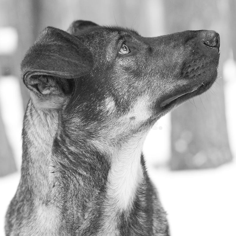 Dog with sad look