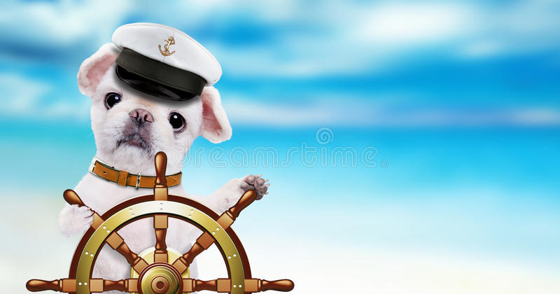Dog sailor holds ship steering wheel in the sea background. Humor stock photos