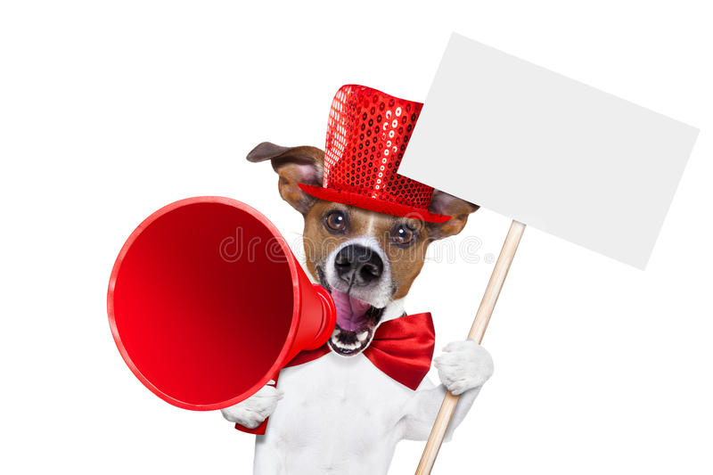 Dog sale megaphone. Jack russell dog ,shouting and advertising sale discount with retro megaphone or big microphone holding white blank placard or blackboard, on stock photo