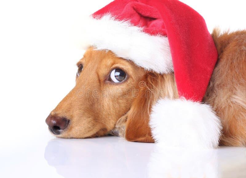 Dog Santa stock images