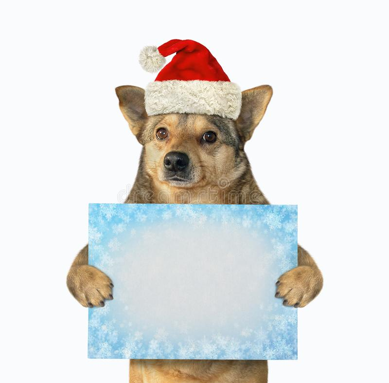 Dog with winter blank sign royalty free stock image