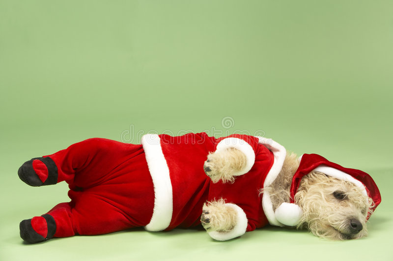 Download Dog In Santa Costume Stock Photography - Image: 8756452