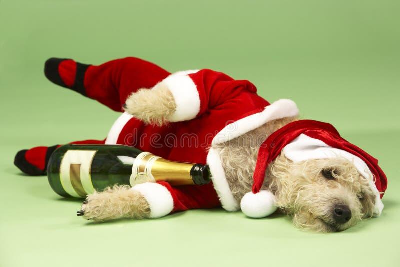 Dog In Santa Costume. Studio Portrait Of Dog In Santa Costume stock photos
